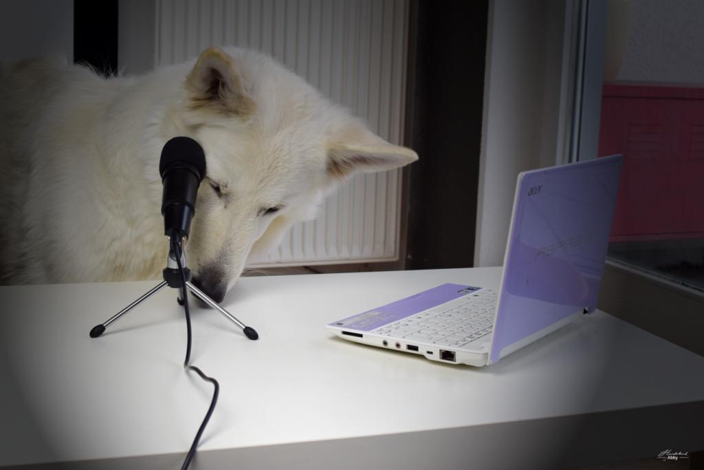 Monatspfoto-Januar-1024x683 %Hundeblog