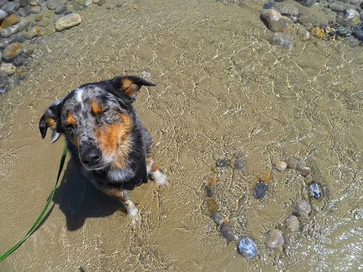 Gonzo2 %Hundeblog