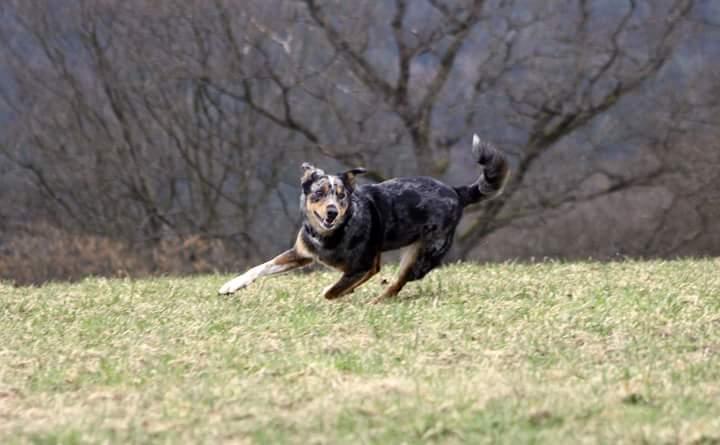 Gonzo3 %Hundeblog