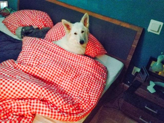 blogger-image-1052905022-1 %Hundeblog
