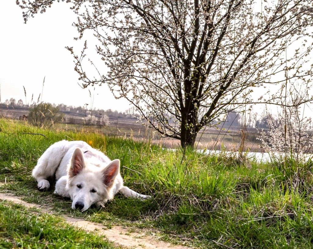 DSC_0066-5-1-1024x817 %Hundeblog