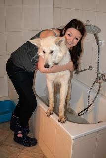 DSC_0225-5-1 %Hundeblog