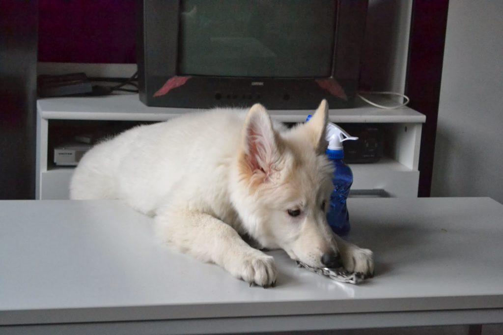 DSC_1039-1-1024x682 %Hundeblog