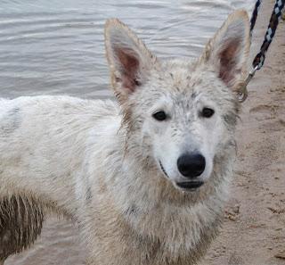 Welpentreffen-1-von-1-1 %Hundeblog