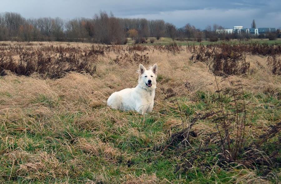 DSC_0175-1 %Hundeblog