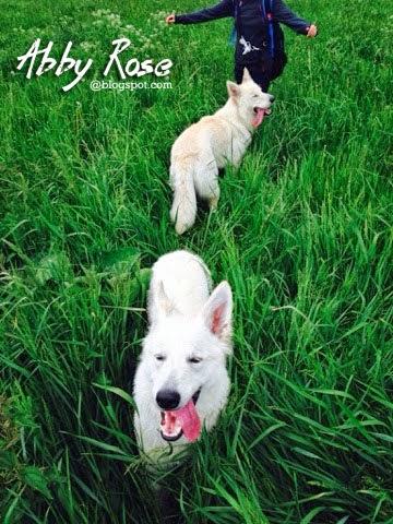blogger-image-121575440-1 %Hundeblog