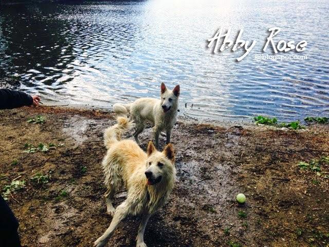 blogger-image-2022722849-1 %Hundeblog
