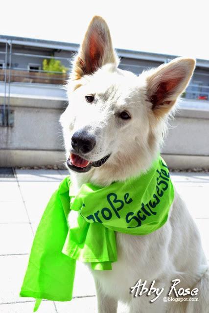 DSC_0006-1 %Hundeblog