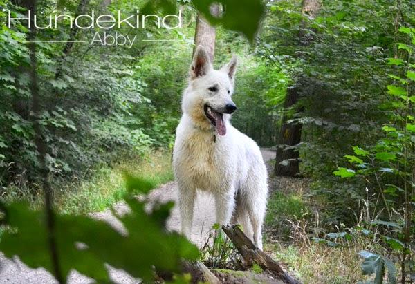 DSC_0164-1 %Hundeblog