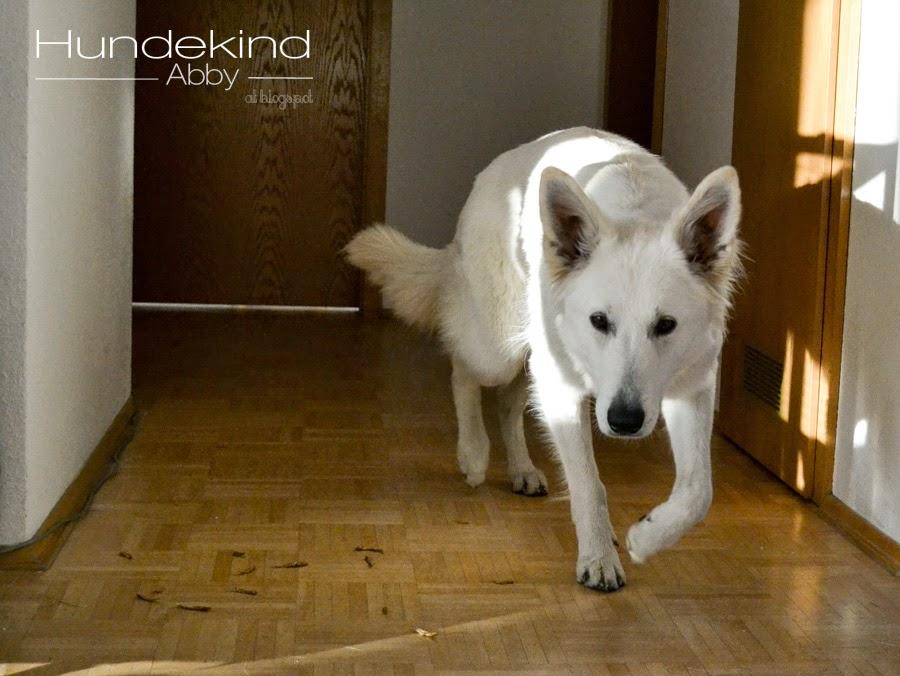 DSC_0559-1 %Hundeblog
