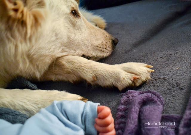 Baby_DA-1 %Hundeblog