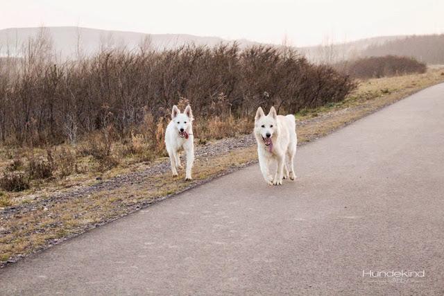 IMG_1048-1 %Hundeblog