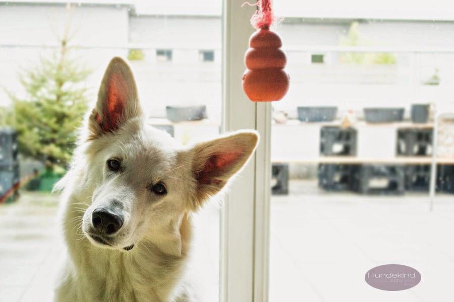MoescherIntelligenztest-1 %Hundeblog