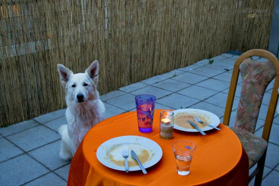 DSC_0116-1 %Hundeblog