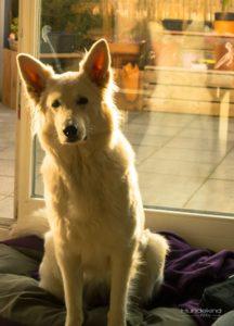 DSC_0129-2-1-216x300 %Hundeblog