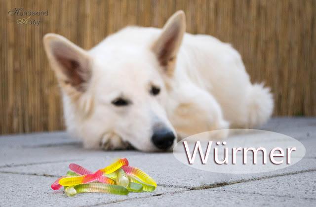 WC3BCrmer_beim_Hund-1 %Hundeblog