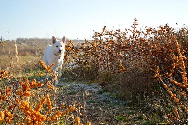 Abby6-1 %Hundeblog
