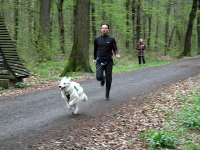 Zieleinlauf-1 %Hundeblog