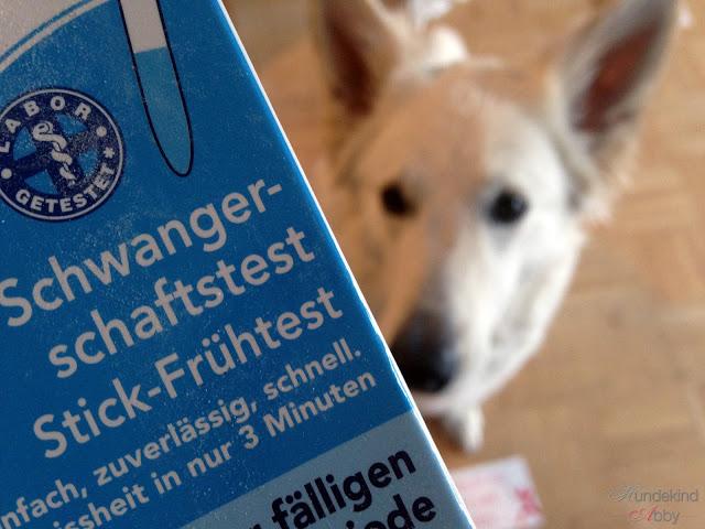 Scheinschwanger-1 %Hundeblog