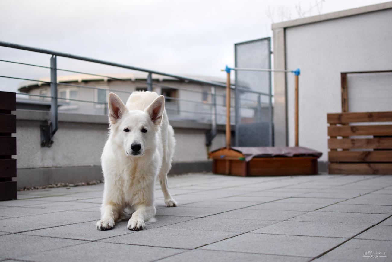 Bodenarbeit für Hunde