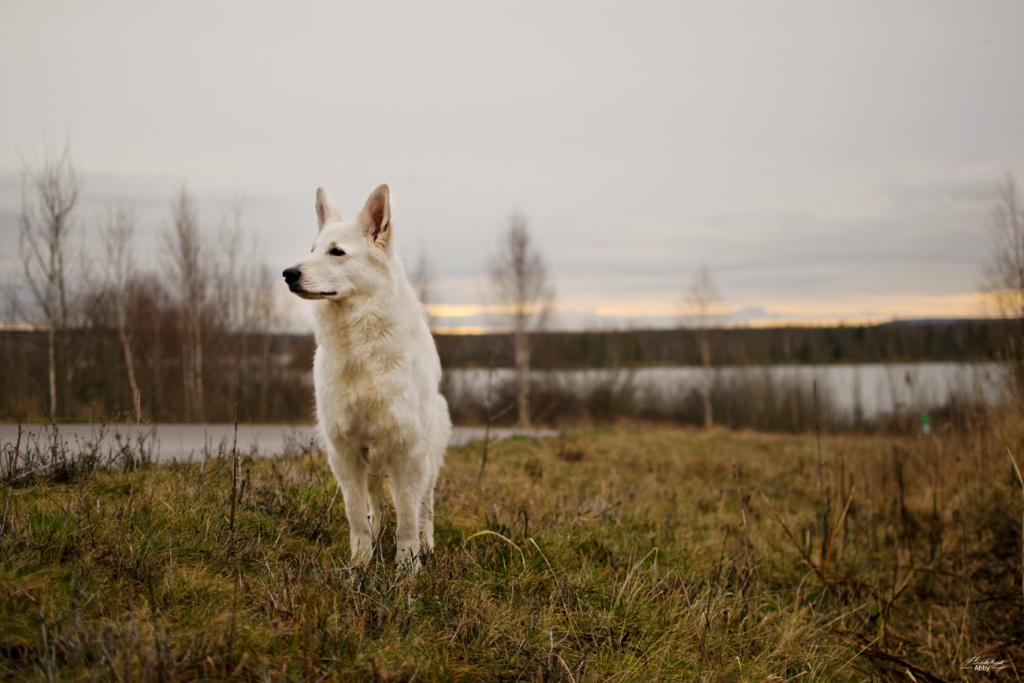 AbbyimGras-1024x683 %Hundeblog
