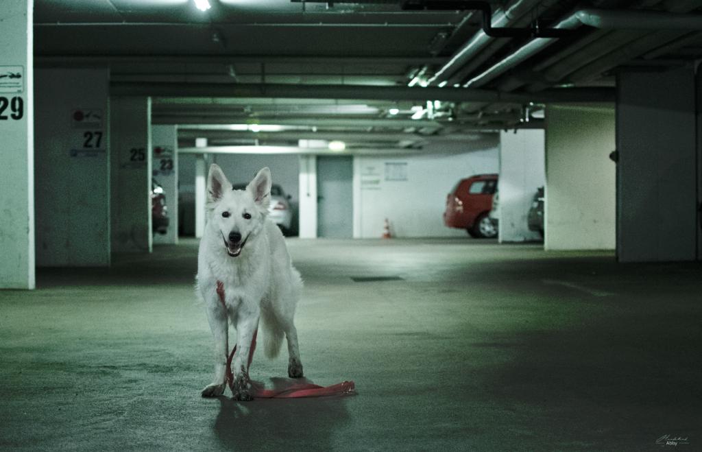Monatspfoto-Februar2-1024x659 %Hundeblog