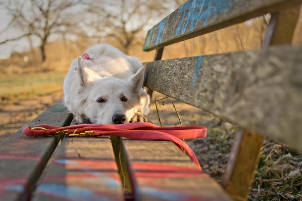 Abby-auf-der-Bank-1024x683 %Hundeblog