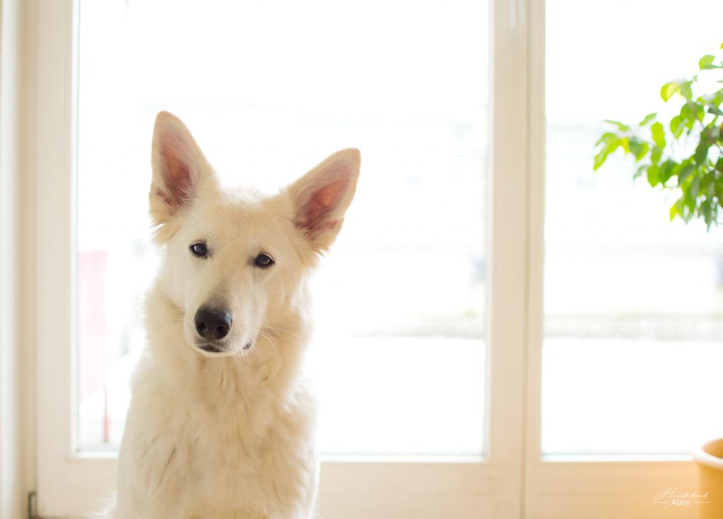 AbbyamFenster-1024x736 %Hundeblog