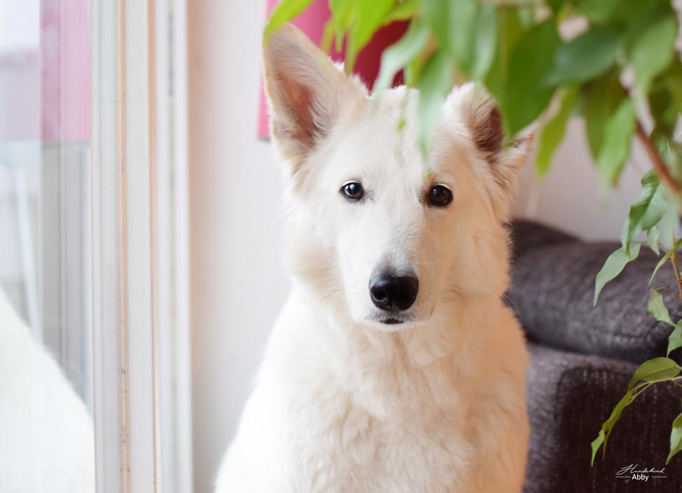 AbbyamFenster22 %Hundeblog
