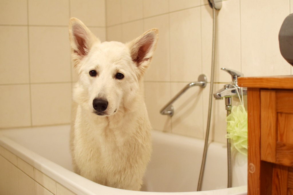 AbbyinderBadewanne-1024x683 %Hundeblog