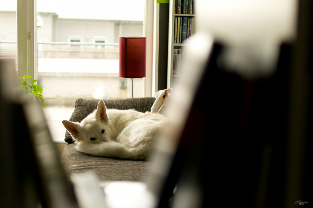 AbbyschlaeftaufSofa-1024x683 %Hundeblog