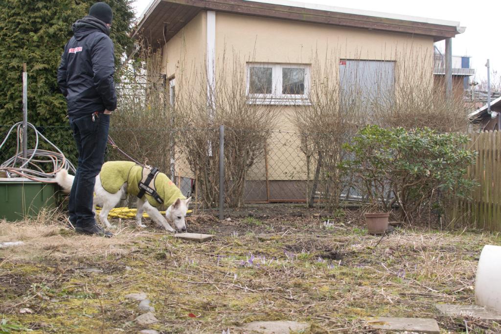 Garten-hinten-mitAbby-1024x683 %Hundeblog