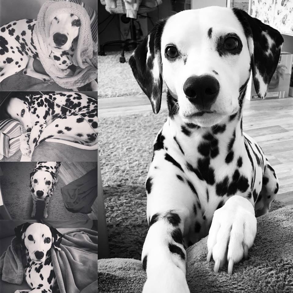 Lilly1 %Hundeblog