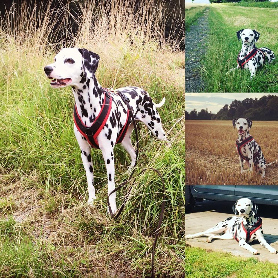 Lilly2 %Hundeblog