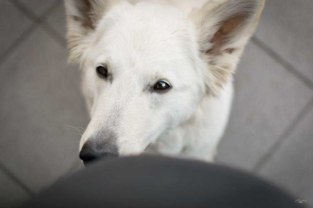 AbbyBauch-1024x683 %Hundeblog