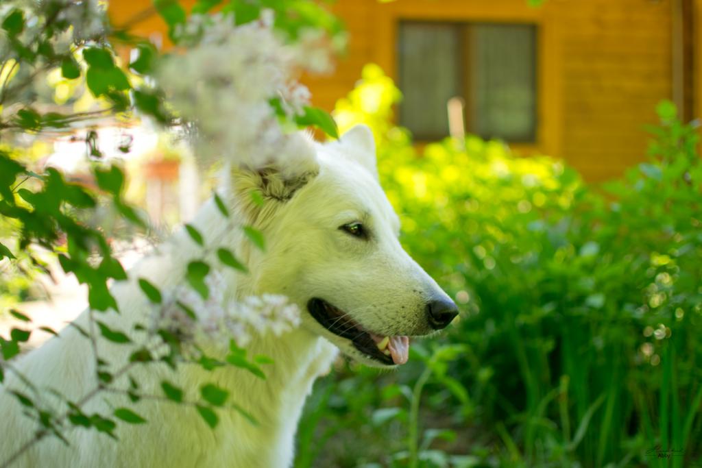 AbbyBlueten-1024x683 %Hundeblog