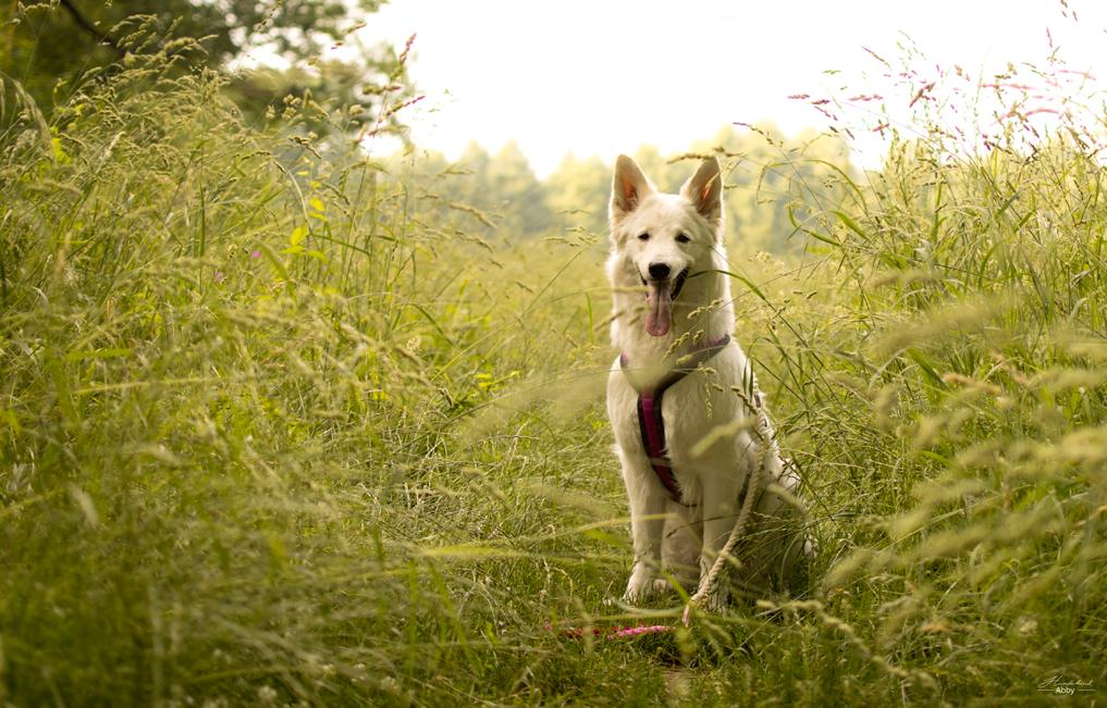 AbbyimFeld %Hundeblog