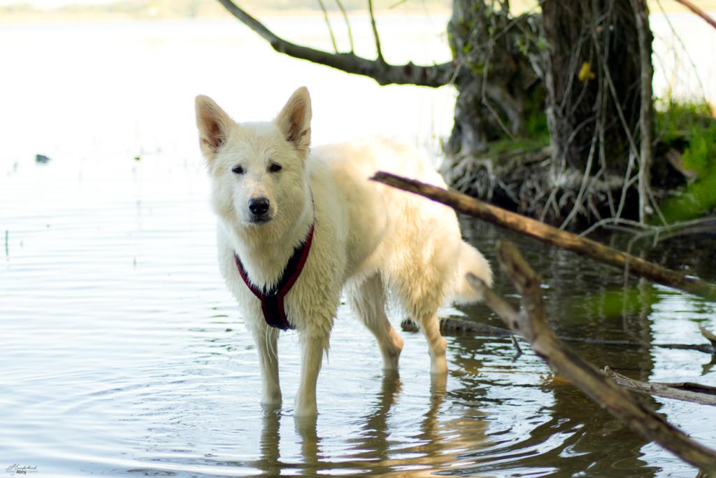 AbbyimSeeimSchatten-1024x683 %Hundeblog