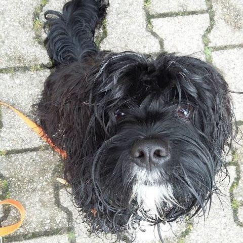 Micky1 %Hundeblog