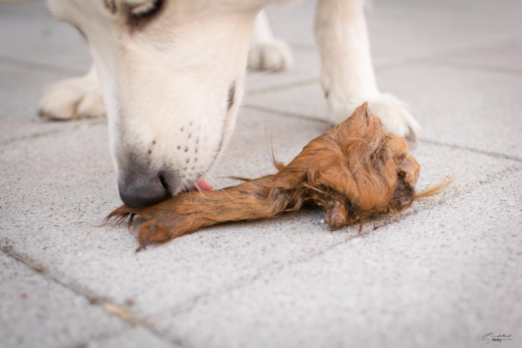 Abby-Rinderohr-1024x683 %Hundeblog