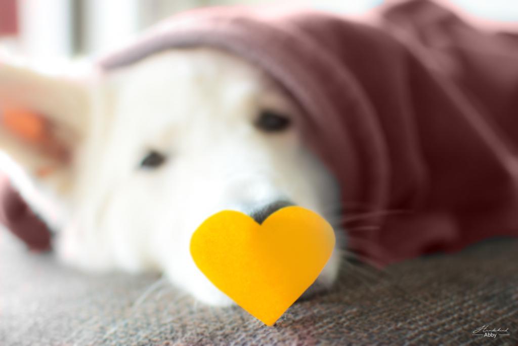 Herznase-1024x683 %Hundeblog
