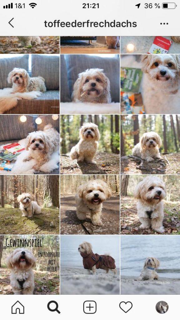 ToffeederFrechdachs-577x1024 %Hundeblog