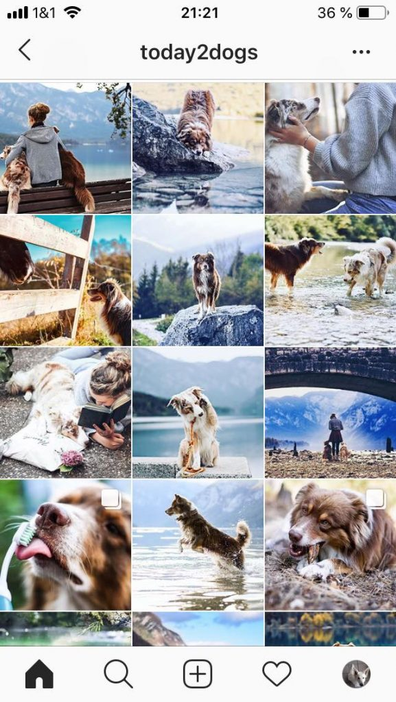 today2dogs-577x1024 %Hundeblog