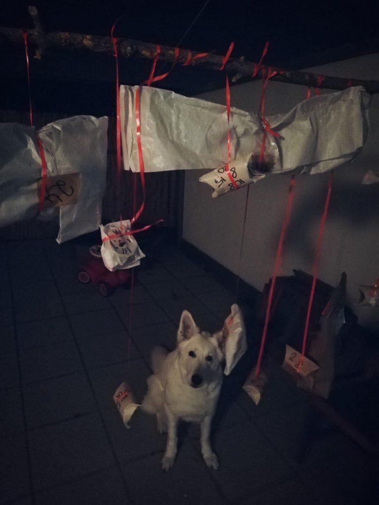AbbymitfertigemKalender-768x1024 %Hundeblog