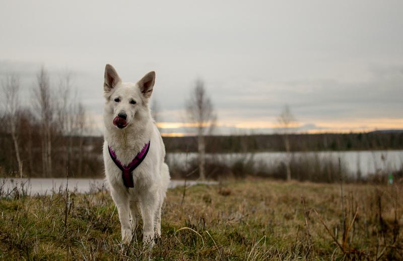 DSC_0012 %Hundeblog