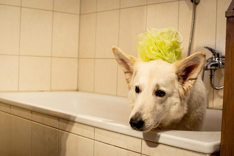 Fellpflege_HundekindAbby-4 %Hundeblog