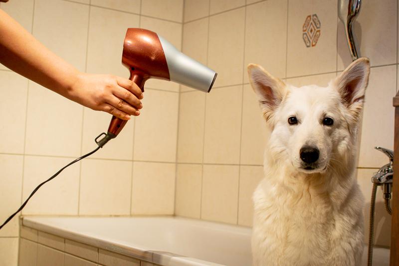 Fellpflege_HundekindAbby-6 %Hundeblog