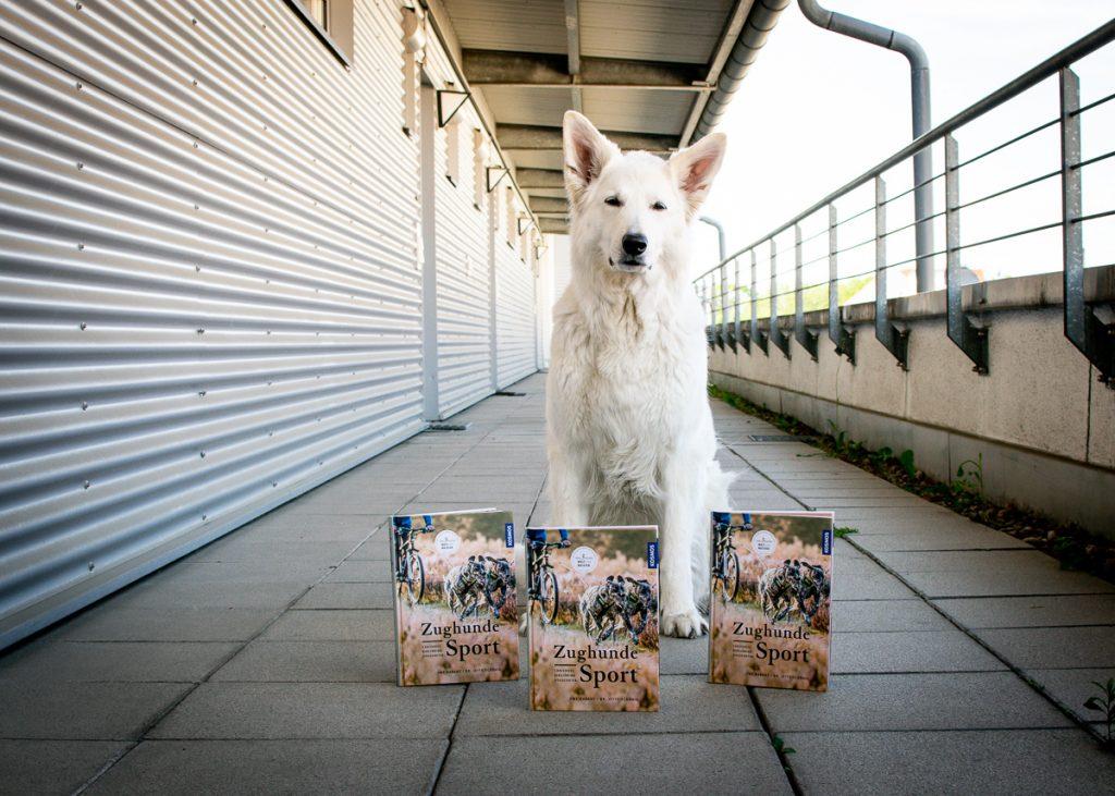 Zughundesport-1-1024x731 %Hundeblog