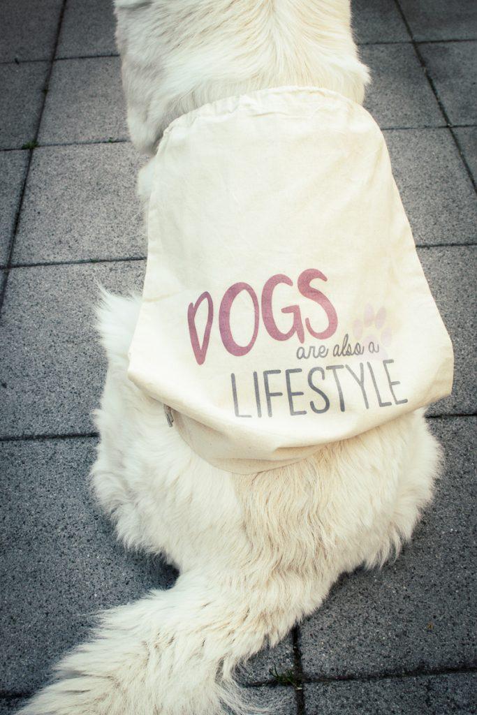 zookauf-shop-3-683x1024 %Hundeblog