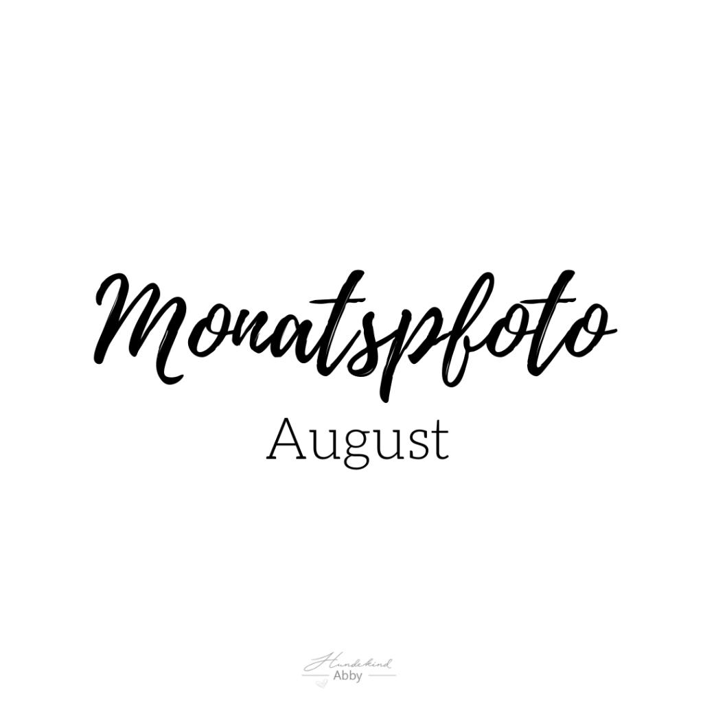 Monatspfoto-1-1024x1024 %Hundeblog